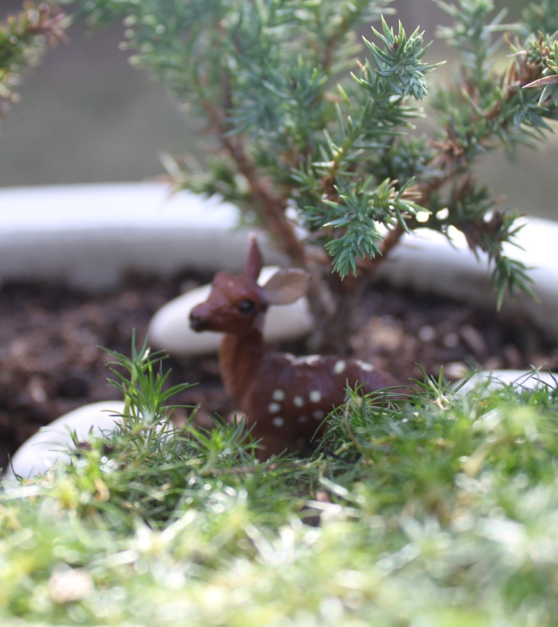mml deer in fairy garden