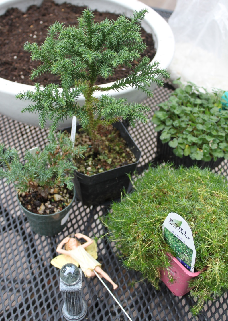 mml fairy garden planting